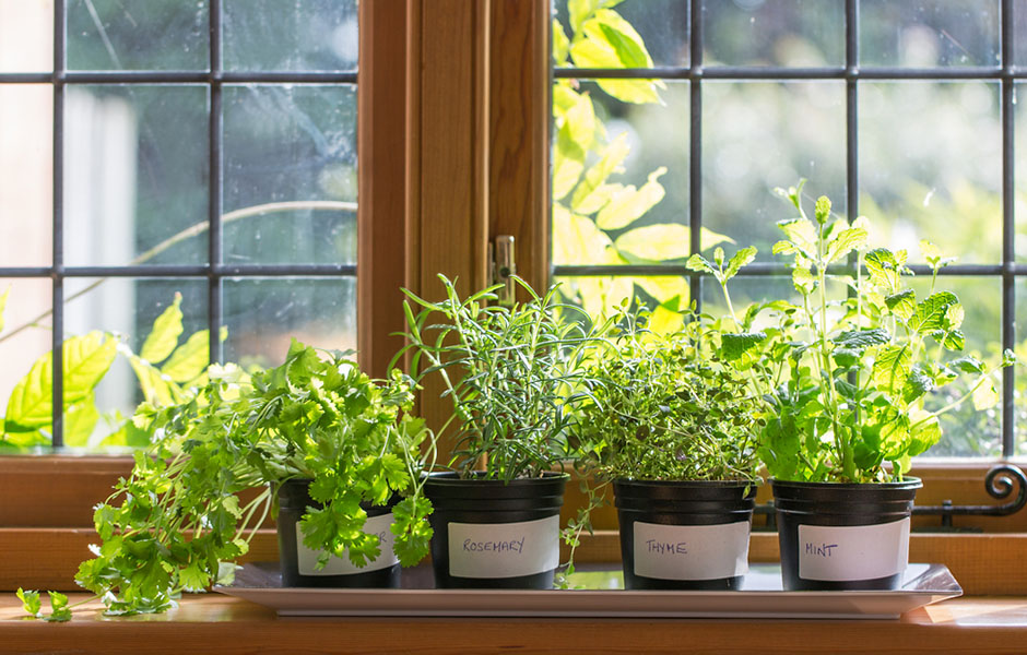 Herb garden for Mother's Day 2021